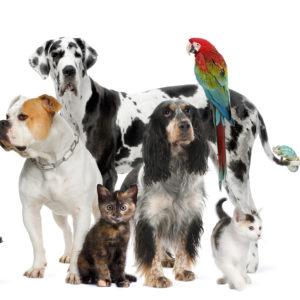 *Animal Harmony Webinar
